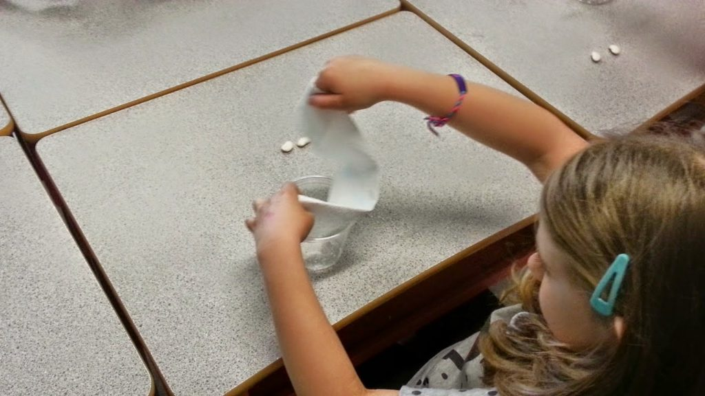 Student working on lima bean science experiment.