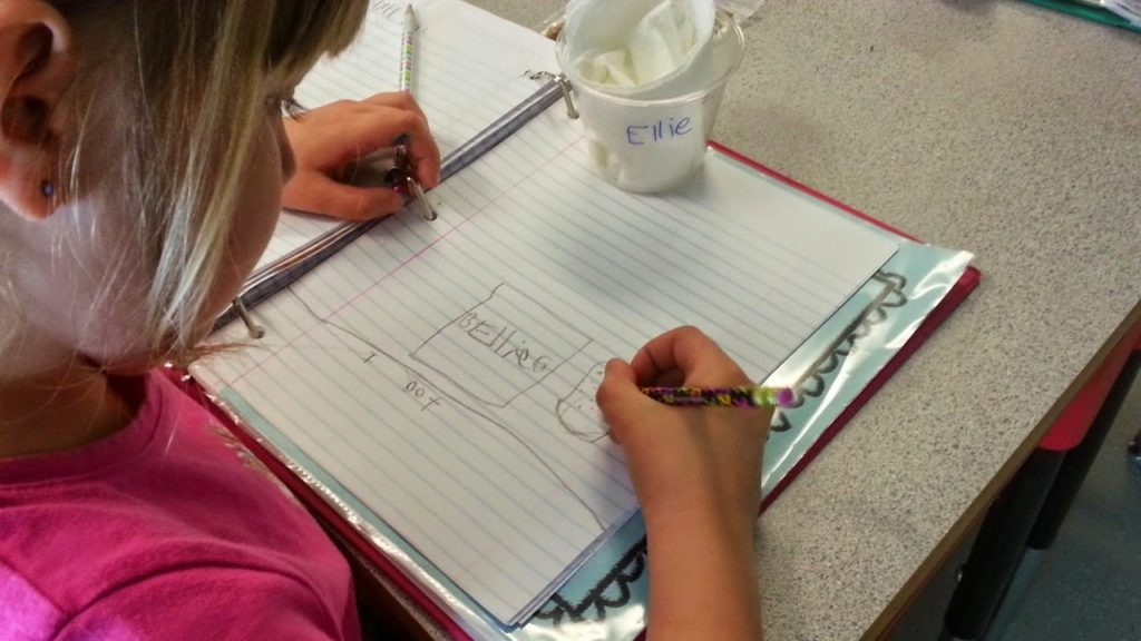 Seed observation of lima bean science experiment.