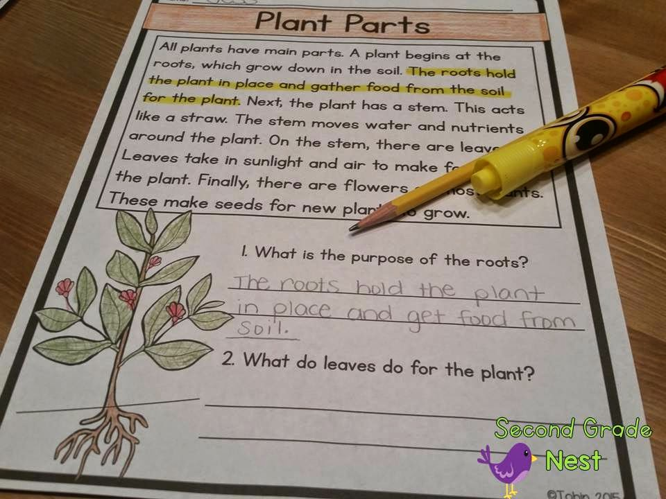 Plants Activities for the classroom- science activities, reading and writing all about plants