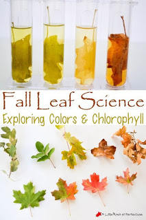 Fall science experiment - Exploring colors and chlorophyll.