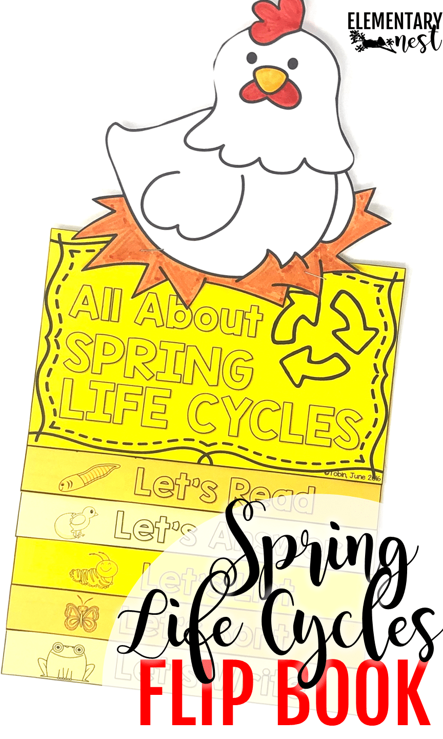 Spring life cycles flip book that teaches students about chicken, butterfly, and frog life cycles that occur in the spring.