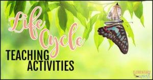 Teaching spring life cycles