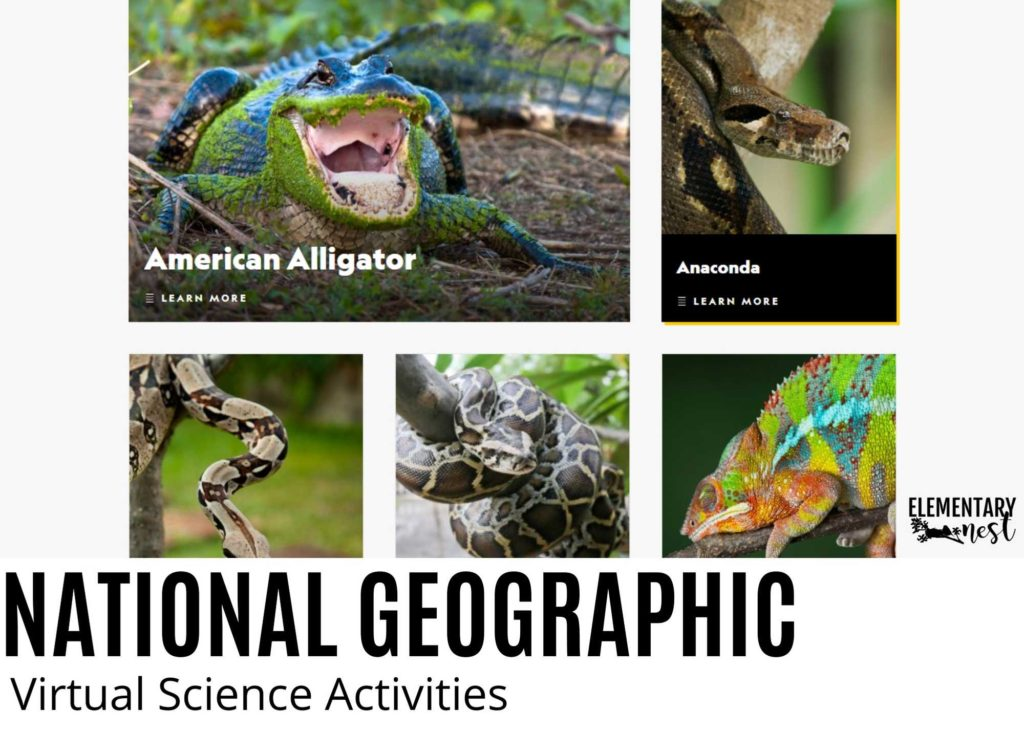 National Geographic for Kids picture of reptile online learning