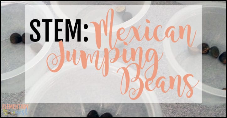STEM Mexican jumping beans