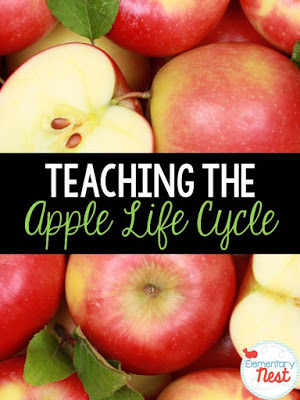 Teaching apple life cycles