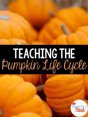 Teaching the pumpkin life cycle