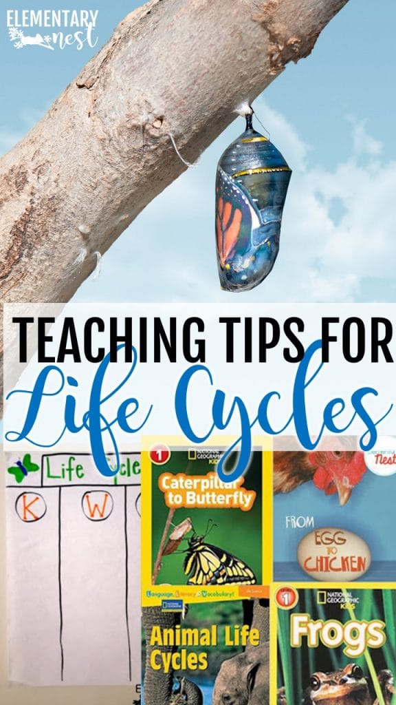 Teaching tips for life cycles