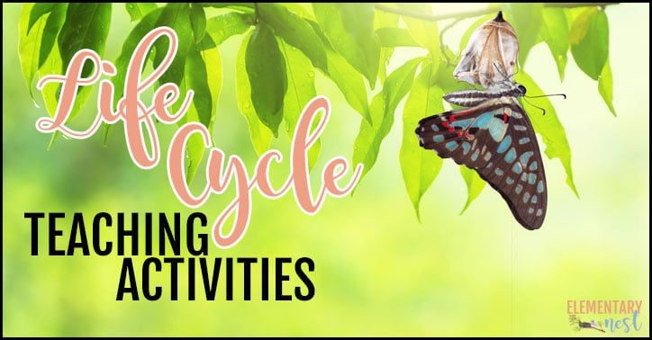 Life cycles teaching activities